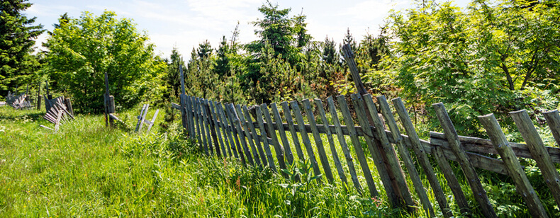Mauvais entretien du jardin voisin mauvaises herbes for Entretien jardin obligation