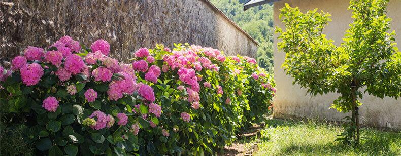 Voisinage et mur mitoyen les obligations de r novation for Entretien jardin obligation